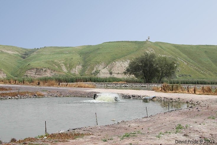 Northern israel fish farm for Illinois fish farms